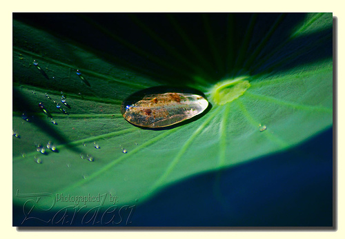 A drop and some droplets.... / shareitnow
