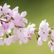 Spring time / davidyuweb