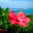 Flower-August