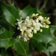 Flower-Nobember